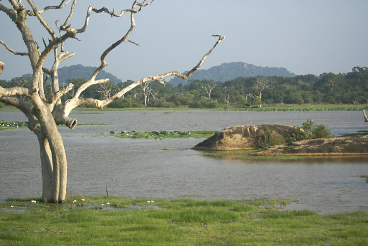 Yala National Park wetlands