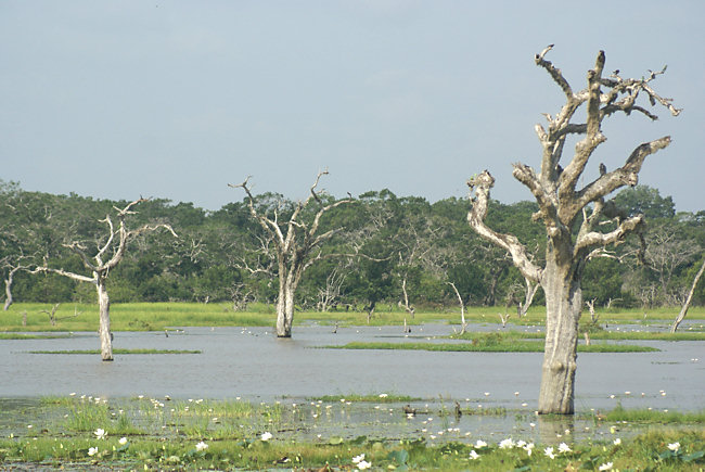 Yala National Park Lakes