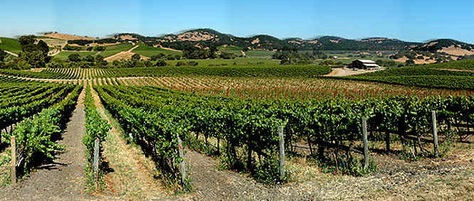 Getting To Napa From San Francisco Without A Car