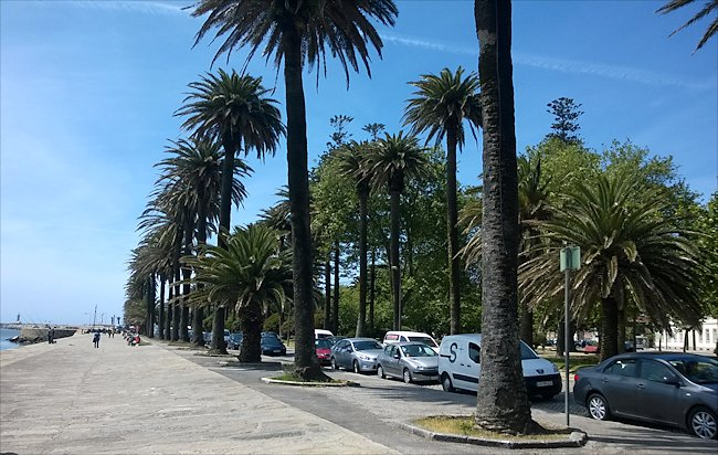 riverside promenade lined with palm trees