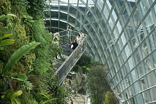 Mountain walkways in  Cloud Forest dome