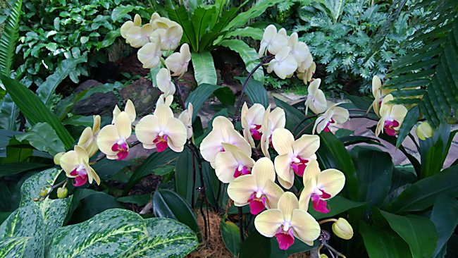Perfect National Orchid Garden