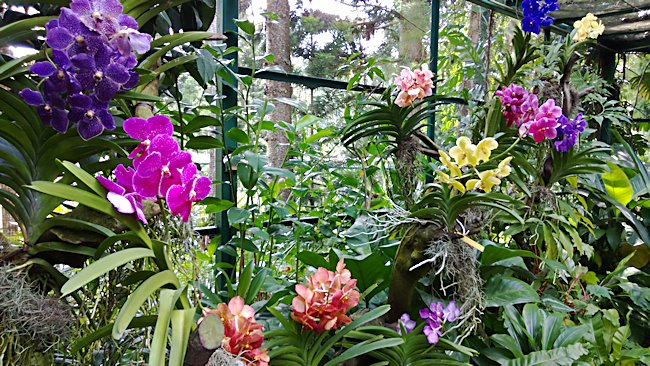 Amazing National Orchid Garden
