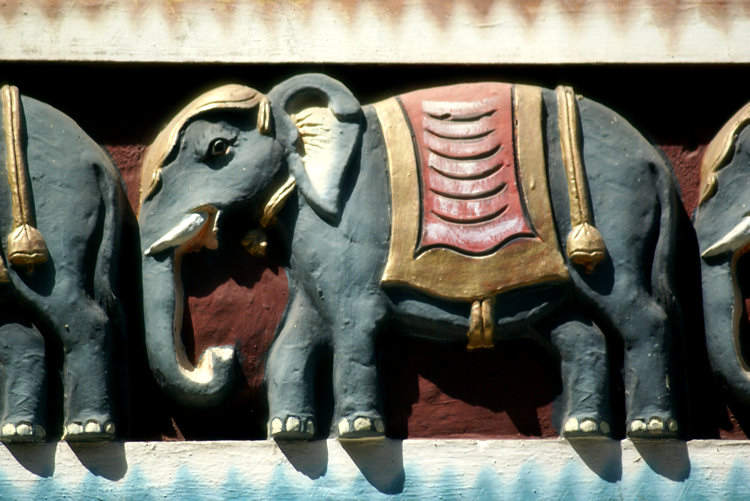 Elephants are used in Hindu ceremonies